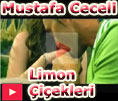 mustafa ceceli limon �i�ekleri vidyo klipi video klip dailymotion izle
